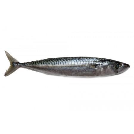Makréla (4 db/csomag, ~600gr)