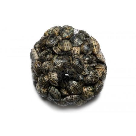 Vénusz kagyló / Éti kagyló (1 csomag = kb 1kg)